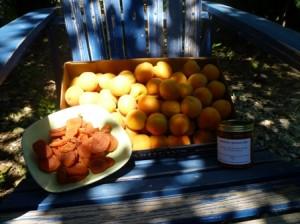 Blenheim Apricots